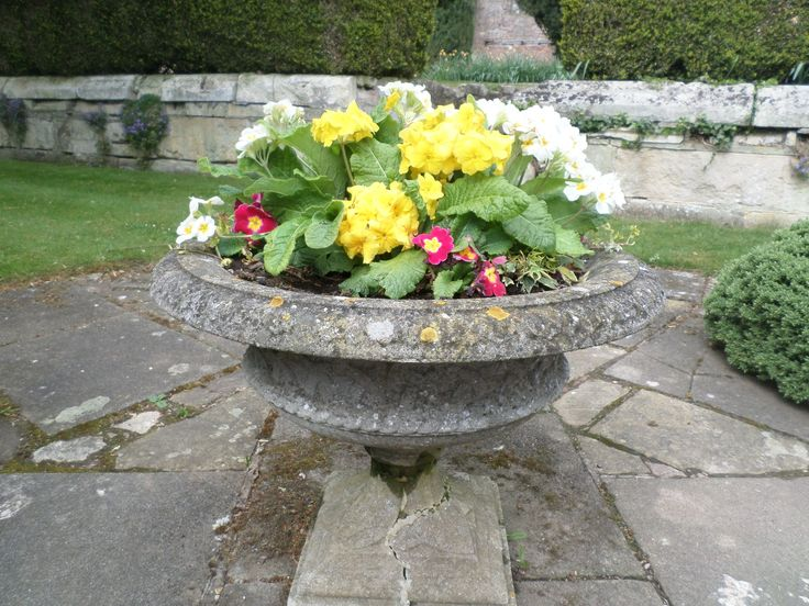spring flower at eastwell manor, by daisy