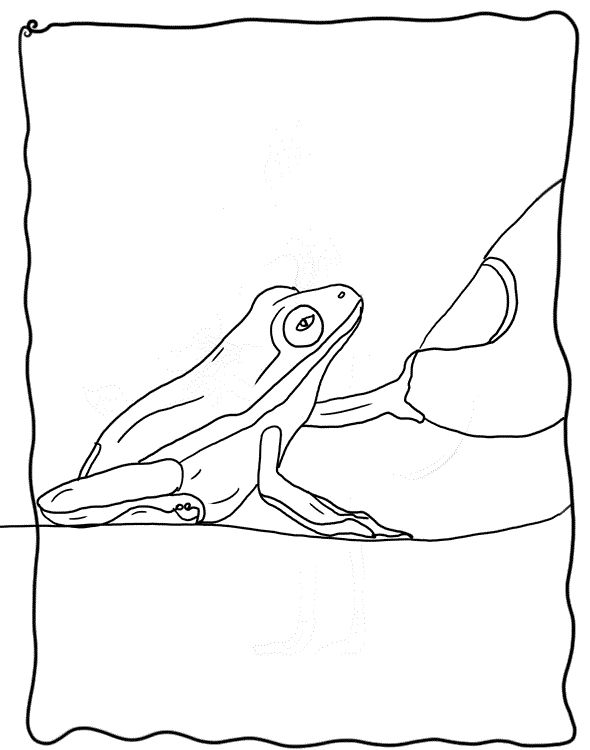 baby frog coloring pages - photo#12