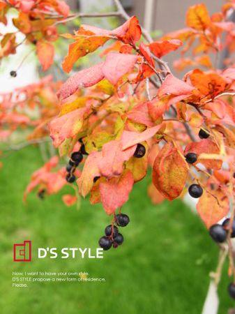 秋ですね〜♪ | ナツハゼ