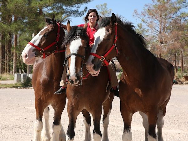 110 best budweiser horse commercialso images on pinterest budweisers emotional 2013 super bowl ad aloadofball Images