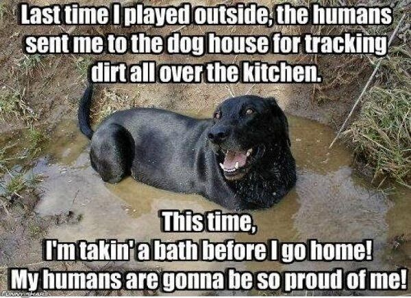 Funny Goat Pictures With Captions | ... captions, funny captions pics, animal captions, captioned animal