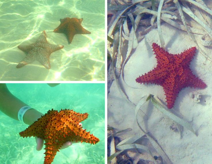 Can't get enough of the starfish in Dominican Republic! Isla Saona and Bayahibe were beautiful
