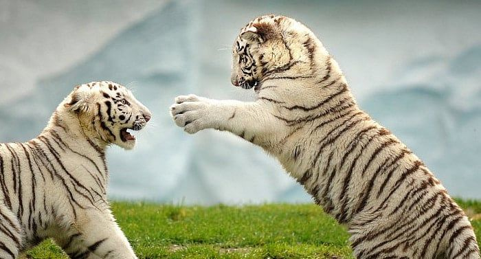 Der Safaripark In Schloss Holte Stukenbrock Ladt Im Sommer Zu Wunderschonen Stunden Ein Dazu Passend Gibt Es Einen Zoo Safarip Zoo Safari Gesundes Hundefutter