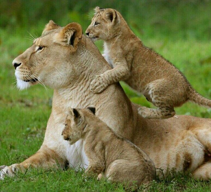 картинки с мамами и детенышами животных там