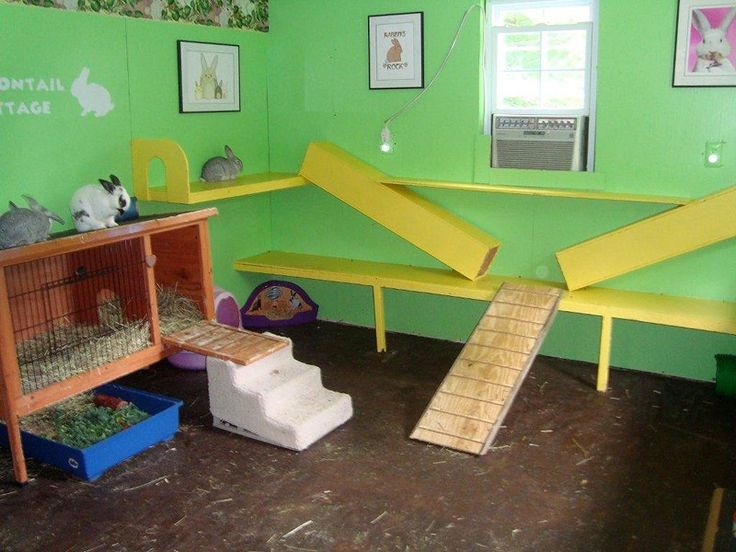 Gallery of recommended rabbit housing | Rabbit hutch photos | Pictures of alternative living areas for bunnies