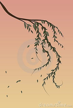 Weeping Willow tree branch background by Transfuchsian, via Dreamstime