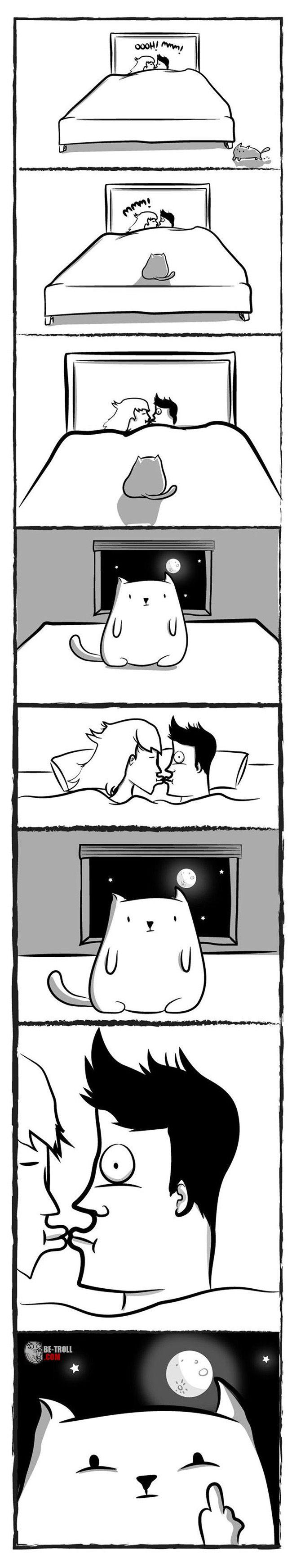 Un chat dans toute sa splendeur... - Be-troll - vidéos humour, actualité insolite