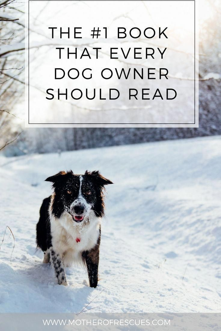 Dog Training Tend Not To Try To Save Money By Deciding On The