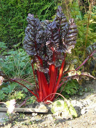 Légumes d'hiver (2)