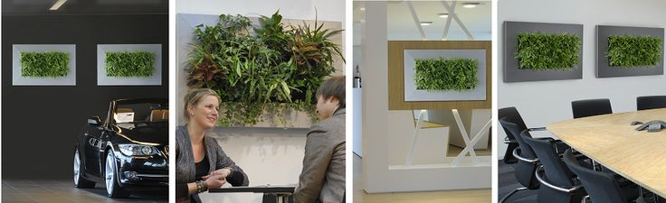 """Awesome new living wall item from Holland! Gets healthy plants on a wall in any location and its self contained -- water, media, plants and """"just hang it""""."""