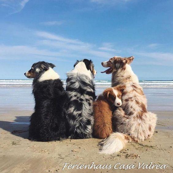 Hunde willkommen. Wir geben Tipps wo die schönsten Hundestrände an der Adria s…