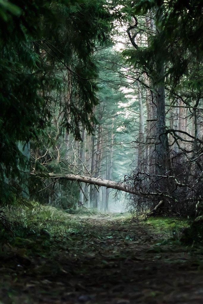 pineandantler: verzauberter wald demonio74 – #demonio74 #forests #pineandantler #verzauberter #Wald