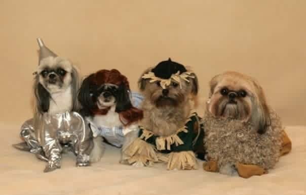 Baka, Yidaki, Roo, and Didji as Wizard of Oz