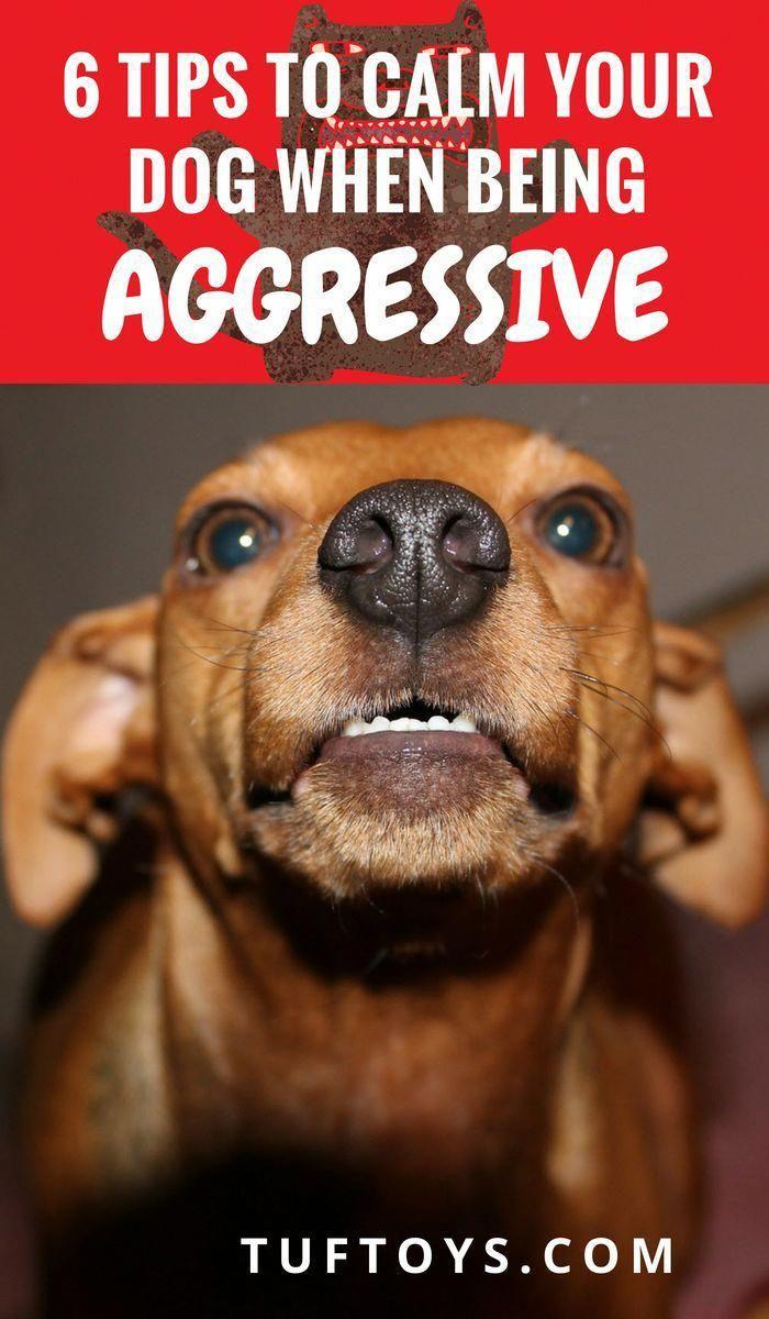 c25628ef700aaf443c720588ba430ffa - How To Get A Dog To Stop Aggressive Biting