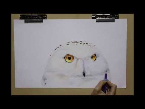 How to draw an Owl #Timelapse by Shanay. #Colour #pencil on #paper