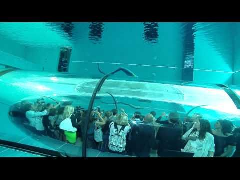 World's deepest pool - Y-40 - Inauguration II - YouTube