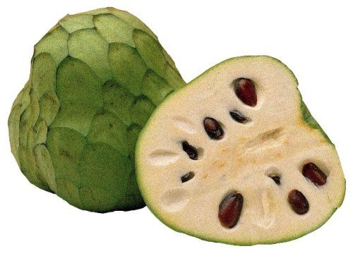 The cherimoya (or chirimoya or custard apple) is the fruit of the species Annona cherimola, which generally is thought to be native to the Andes.  It grows on a deciduous or semi evergreen shrub or small tree. The fruit is oval, often slightly oblate, 10–20 cm long, with a smooth or slightly tuberculated skin. The fruit flesh is white and creamy, and has numerous dark brown seeds embedded in it. The flesh is soft, sweet and white in color, with a sherbet-like texture.