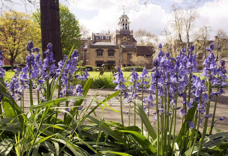 Our lovely central campus walkway while the bluebells are out - by Marianne Baker