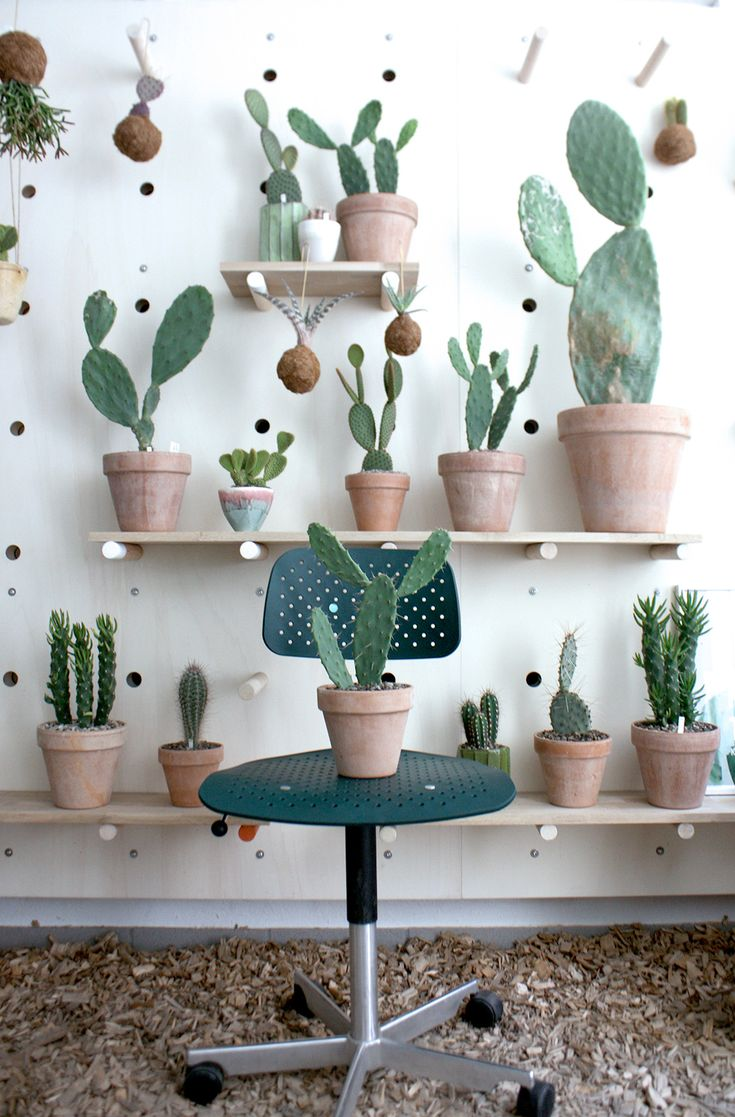 Cacti on shelves on the wall