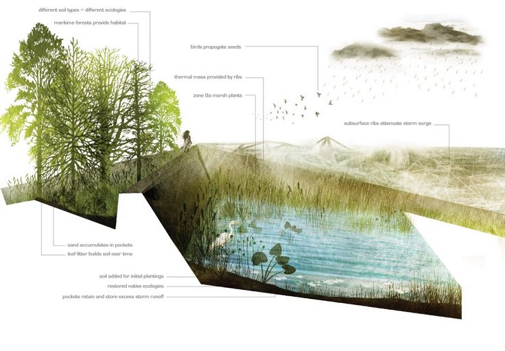 rendered section landscape architecture - Google Search