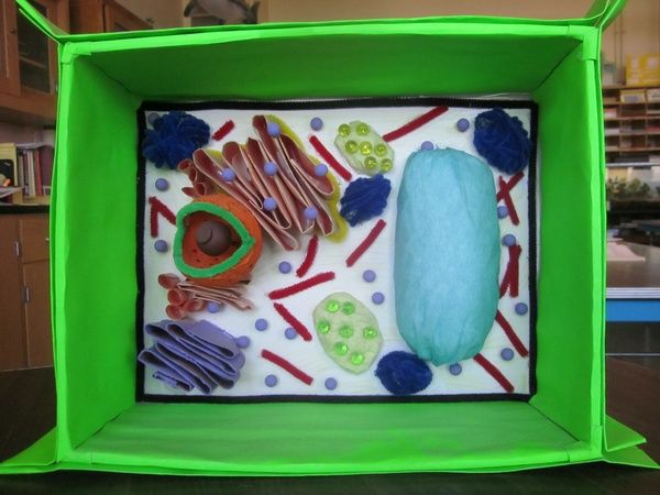 Plant Cell Model high-school-biology