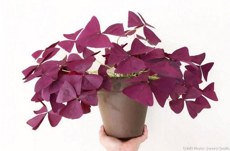 17 meilleures id es propos de plante d 39 int rieur sur - Petit arbre d interieur ...