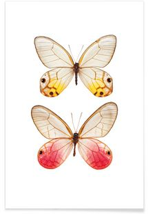 Butterfly 4 - Curious Collections by Marielle Leenders - Premium poster