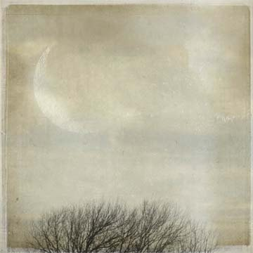 winter moon above the treetops