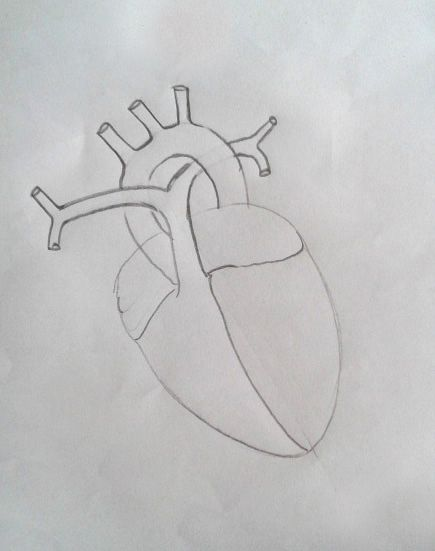 DRAW IT NEAT: How to draw human heart labeled | Heart ...