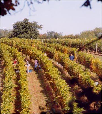 Sopron Wine Region