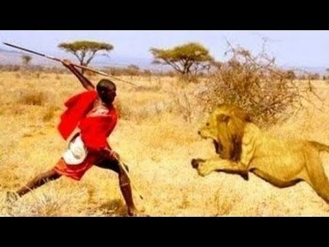 Best Documentary Lion Vs Man Real Fight Man Attack Lion Top