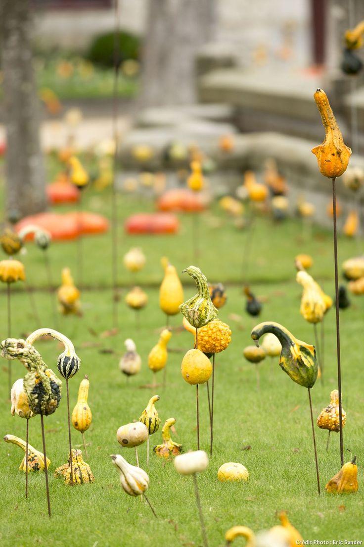 Impressionnantes cucurbitacées ou feuillages chatoyants? Potagers, parcs…#automne #jardin #courge #autumn