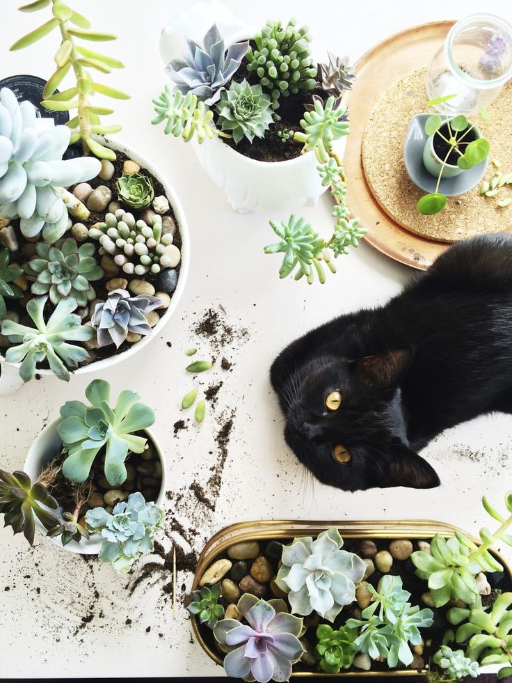 Chat noir et plantes grasses