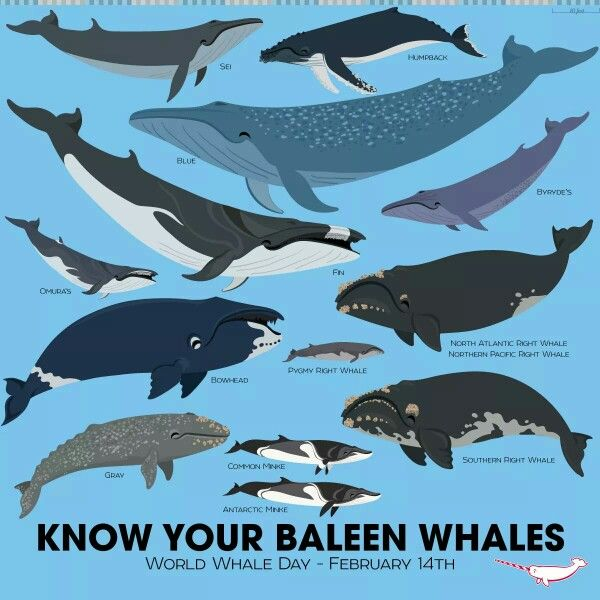 an analysis of animal rights for marine mammals Net loss: the killing of marine mammals in foreign fisheries, the report from   deaths during fishing for seafood species vary widely, notes the report  it's also  an animal welfare issue, because large whales can also trail.
