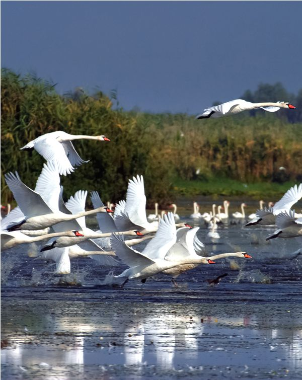World - 9/100 - BirdWatching The Danube Delta ♦ Romania #romania