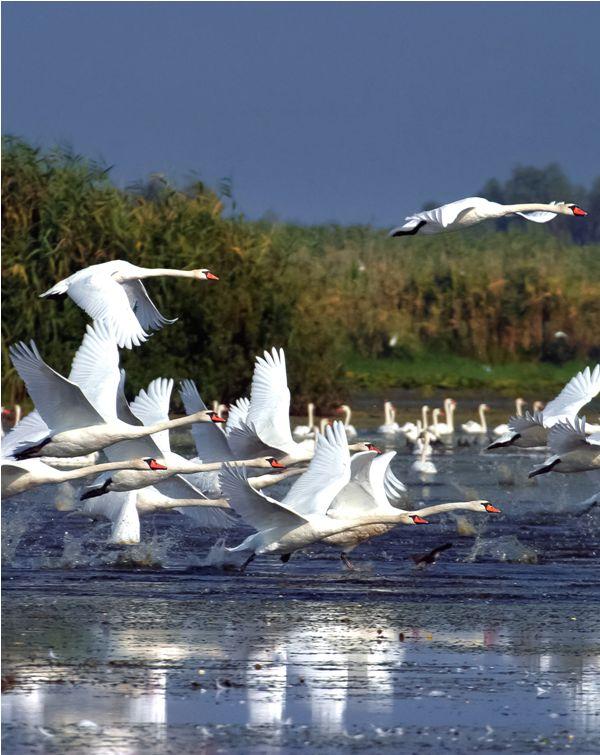 The Danube Delta ♦ Romania #romania