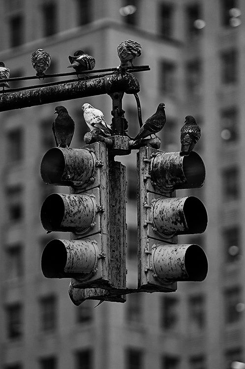 At the traffic lights - Love black and white photos. No matter what the subject is...
