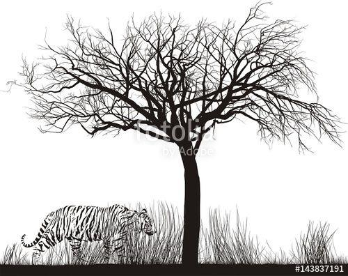 Vector: Tiger in tall grass