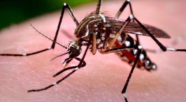 Virus Zika: Generalitat Valenciana llama evitar receptáculos agua estancada