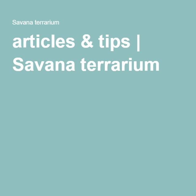 articles & tips | Savana terrarium