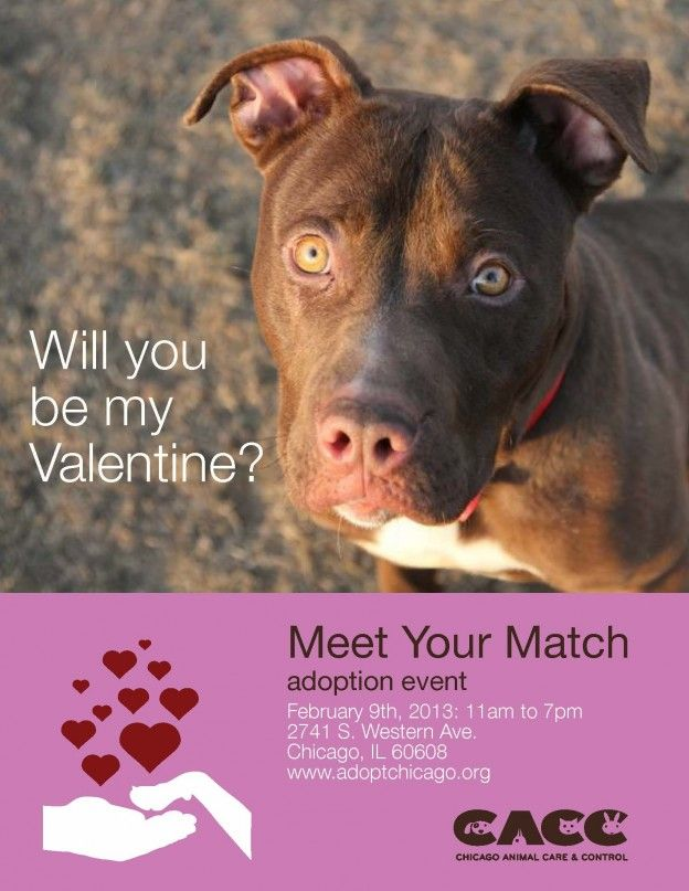 Meet Your Match Pet Adoption Event, Chicago Animal Care & Control