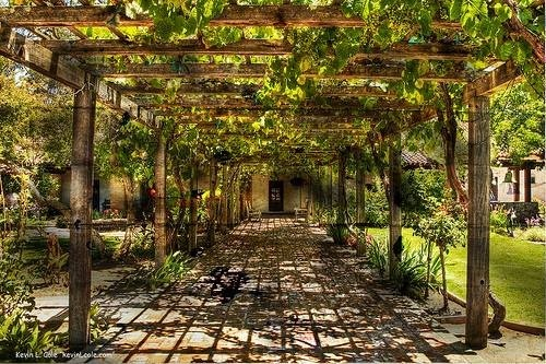 Backyard Vineyard Design : Grapevine trellis adjust to smaller version  grapevine trellis ideas