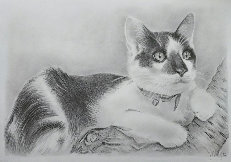 Kitty pencil drawing