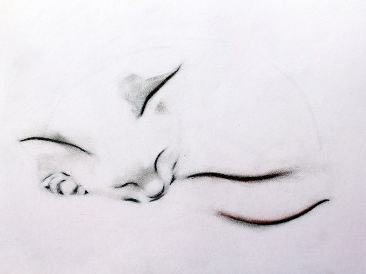 ARTFINDER: Sleeping Cat Print by Kellas Campbell - My cat was fast asleep, curled up like a round, furry pillow. I used graphite and pastel pencils and tried to capture her sleepy cuteness.