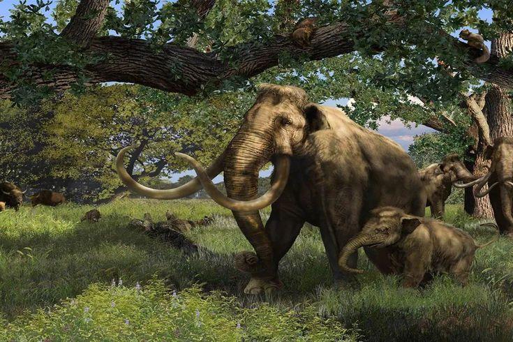 10 Ultra Cool Megafauna Giants | Prehistoric world, Giant ...