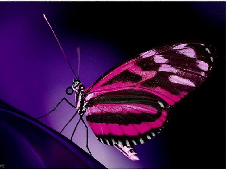 pink butterfly..God is amazing..