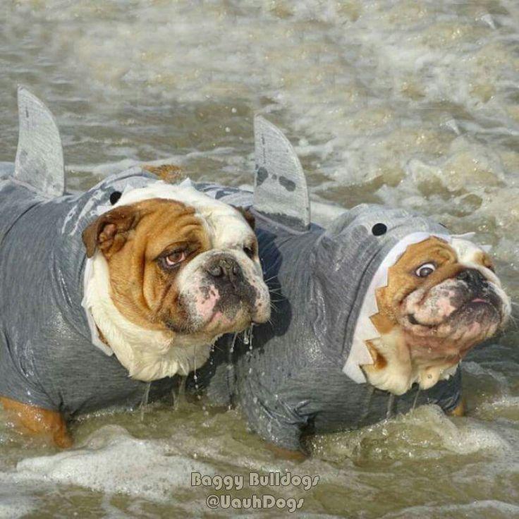 Shark !!!!