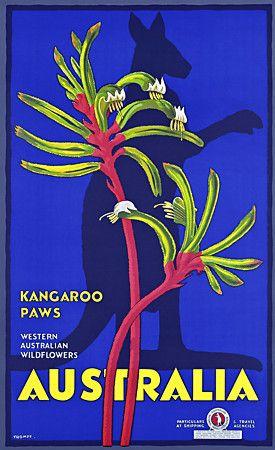Kangeroo Paws.  Western Australian Wildflowers  Vintage travel print   http://www.vintagevenus.com.au/products/vintage_poster_print-tv810