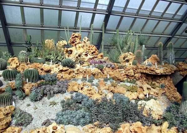 Cactus y plantas suculentas en el jard n bot nico nacional for Jardin cactus madrid