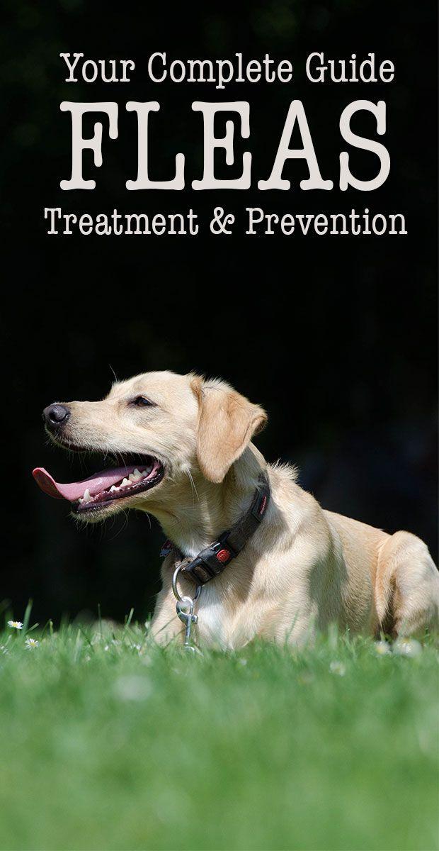 25 best ideas about fleas on pinterest flea remedies dog flea remedies and natural flea remedies. Black Bedroom Furniture Sets. Home Design Ideas